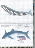 Zebra whale and elegant selachosaurus by Preradkor