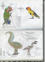 Parrots of Aeolus 2 by Preradkor
