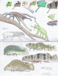Octodactylopods and spiderfishes