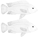Labidochromis caeruleus uncolored by Preradkor