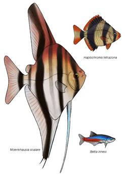 Parallel universe fish