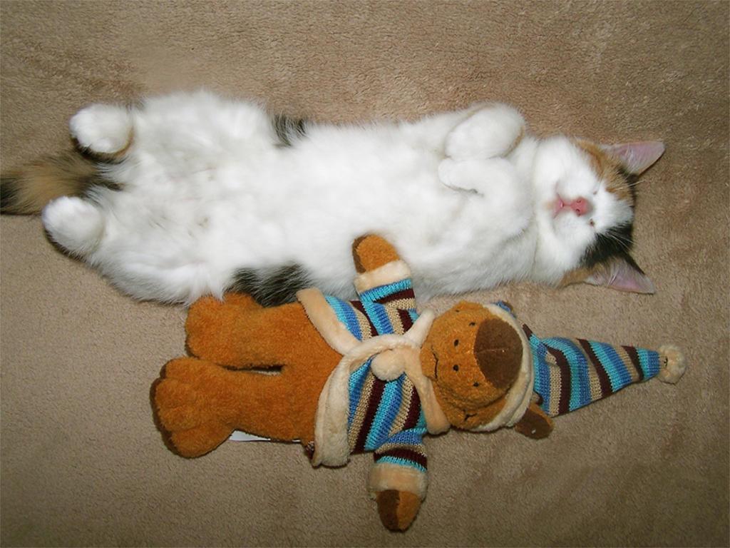 Funny Cat by kolano