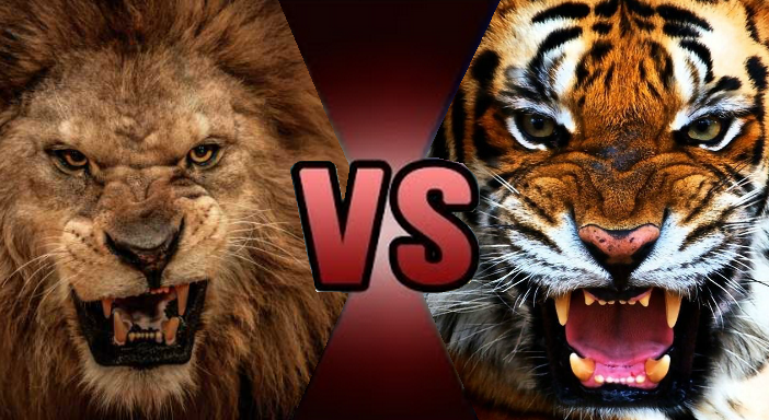 Death Battle Prelude: Lion vs Tiger by Kiryu2012 on DeviantArt
