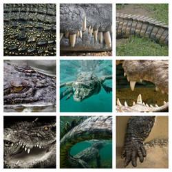 Crocodile Aesthetic by Kiryu2012