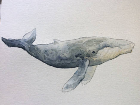 Rodger Humpback whale