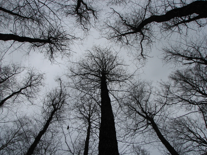 dark_trees_by_ikkari.jpg