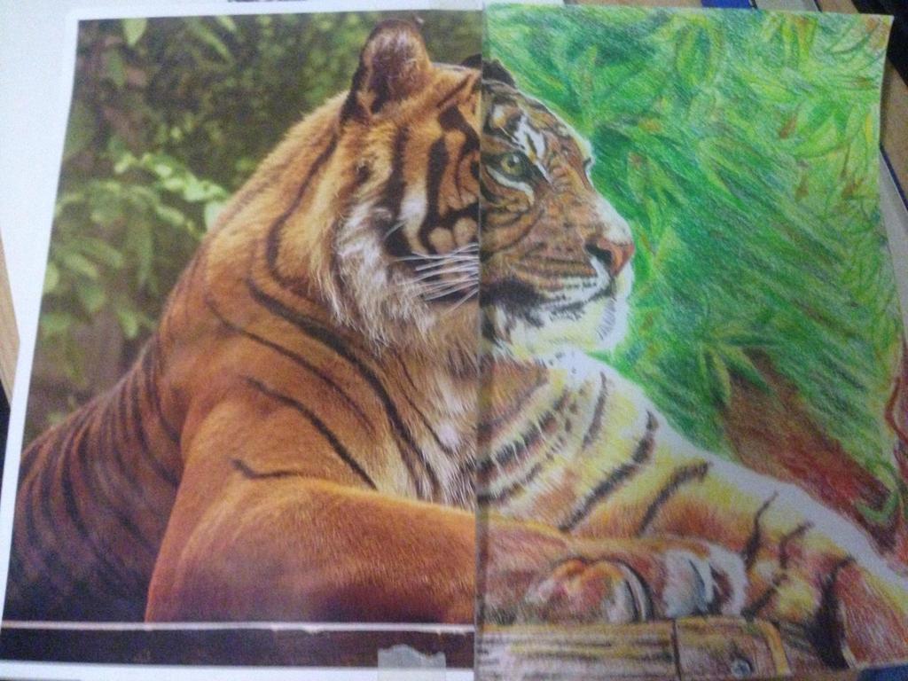 Tiger (Prismacolor) by DOL2006