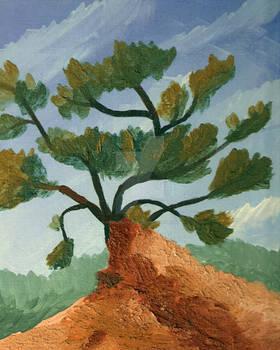 Torrey Pine 01