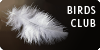 Birds Club Icon 2 - Feather by meihua