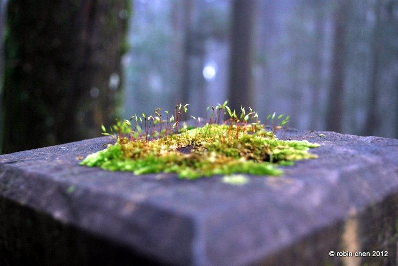 miniature world by meihua