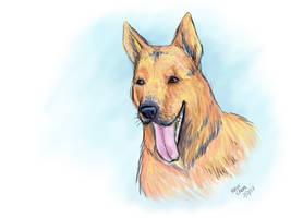 Izabela - German Shepherd - for morho