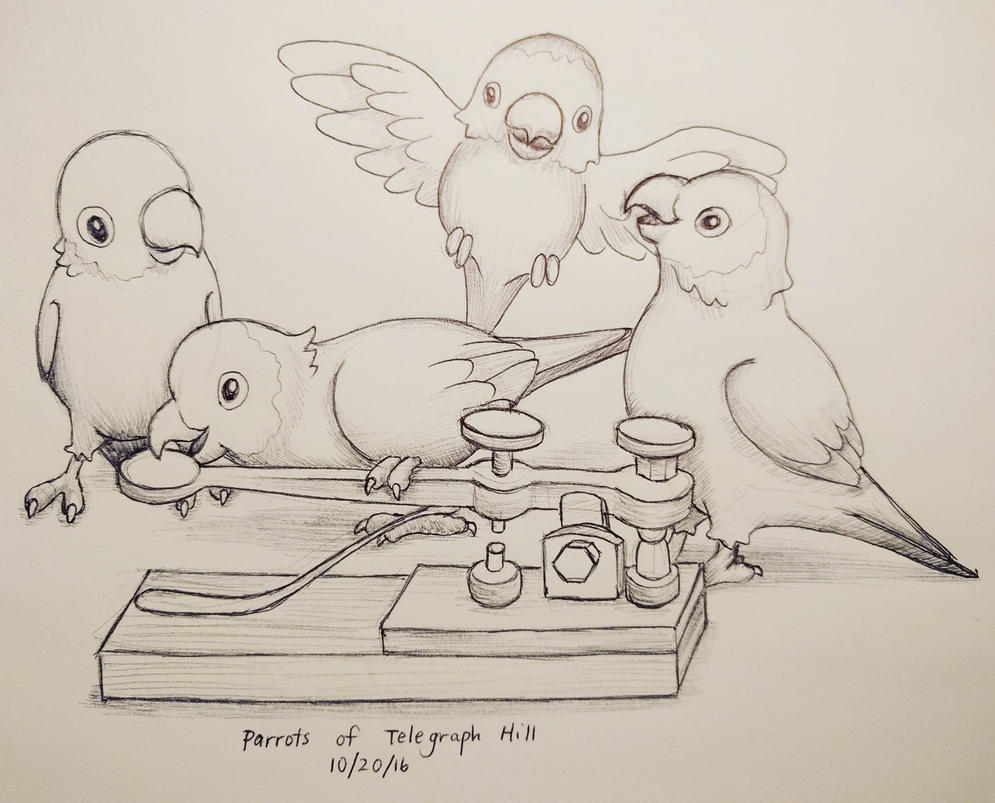 Inktober day 20 - Parrots of Telegraph Hill by meihua