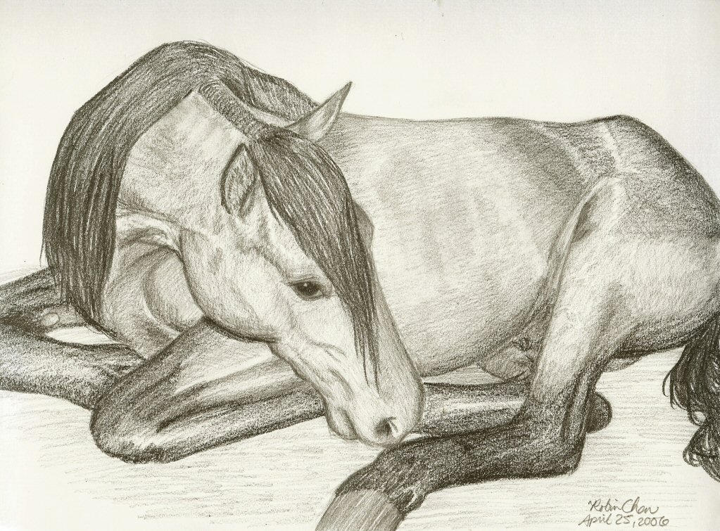 horse lying down by meihua on DeviantArt