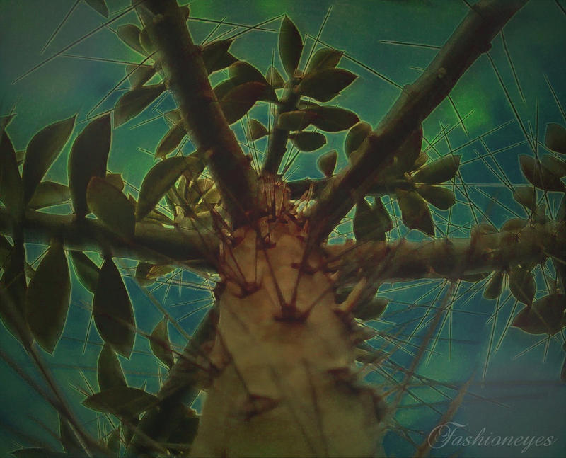 Life's thorns by fashioneyes