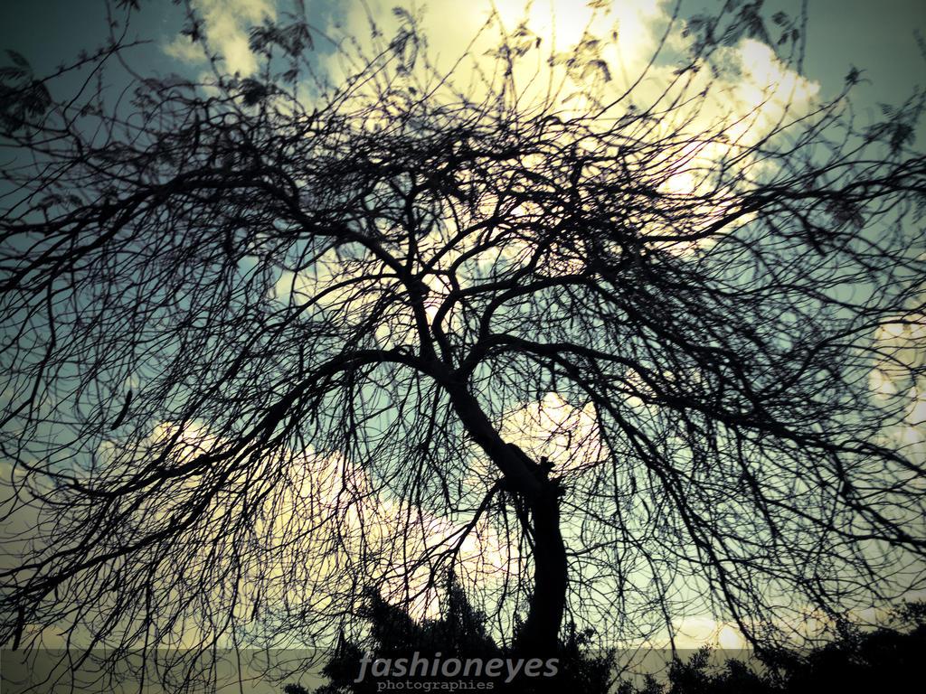 Trees by fashioneyes