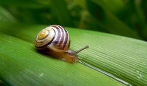 Snail by lali-lilou