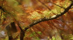 Couleur D'automne Tree Of Life