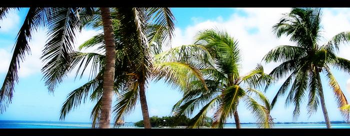 Palm tree header by petemt on DeviantArt