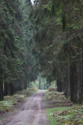 Forest by jinterwas