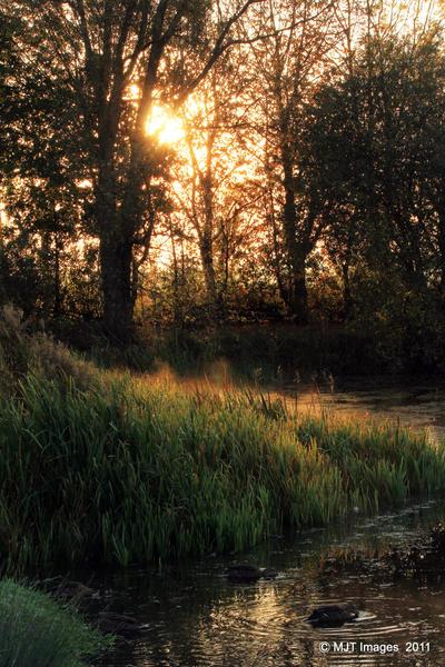 Watermead Wanderings by MichaelJTopley
