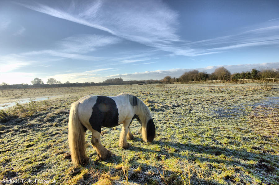 Chilly Hossie by MichaelJTopley