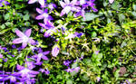 HDR Quality Flowers BG