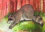Raccoon ACEO