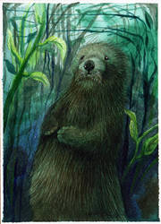 Kelp Forest by Redwall151