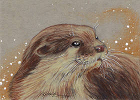 Asian Small-clawed Otter ACEO by Redwall151