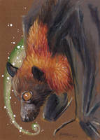 Malayan Flying Fox ACEO