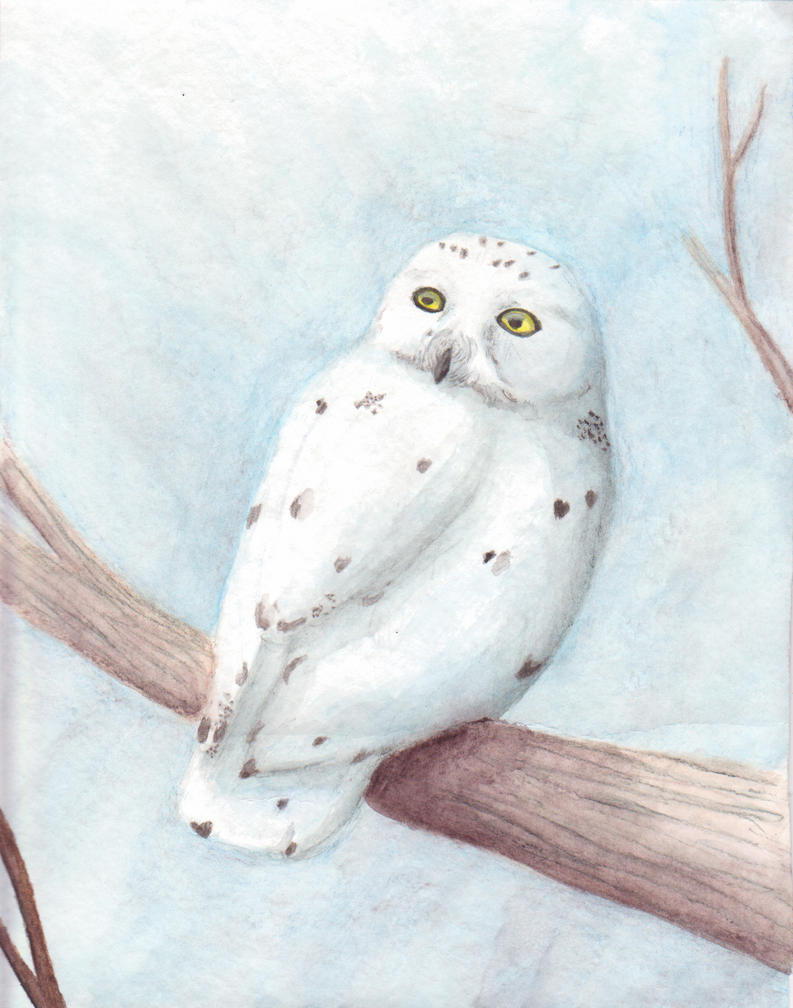 white owl chat The white owl (or snowy owl) always sits above me during my meditations he is my guardian spirit animal guide this is sone attributes of the white owl: the owl is the symbol of the feminine, the moon and the night.