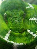 Python by soyrwoo