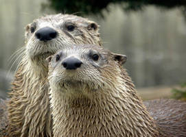 Otter Absurdity by soyrwoo