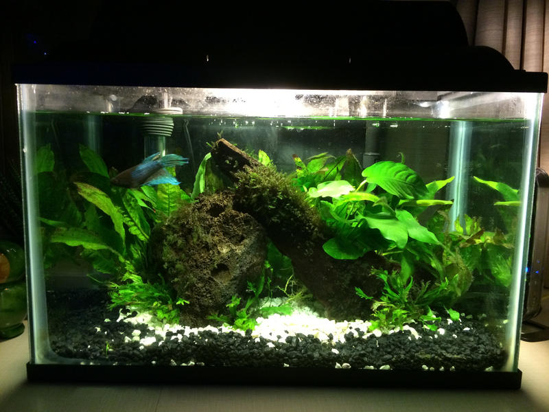 5 5 Gallon Dorm Room Betta Tank By Soyrwoo On Deviantart