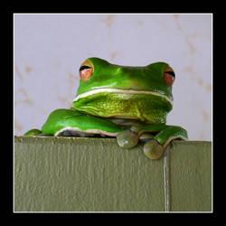 Foo Frog by debs