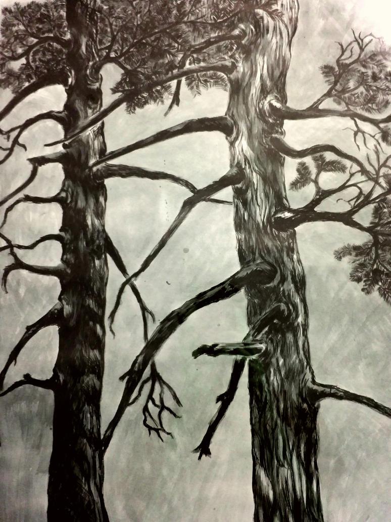 pine tree by marriansebastian