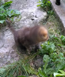 Kitten buffering