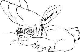 johnny rabbit