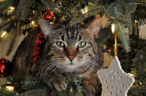 The Christmas Cat by erbphotography