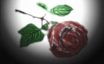 Last Rose....