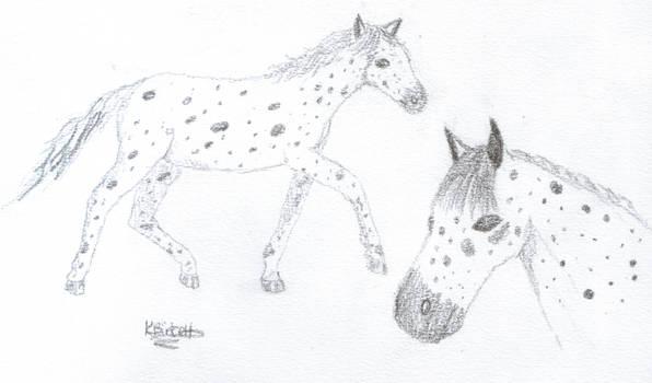 Nyx: Knabstrup Horse