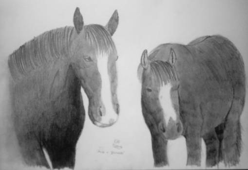 My Horses - Ace and Dinah