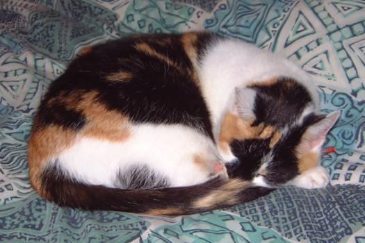 Mitzi Asleep