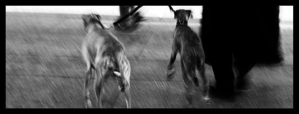 Dogs by goldenbreeze
