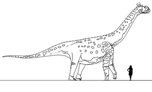 Stem-Bird Files: Camarasaurus supremus by randomdinos