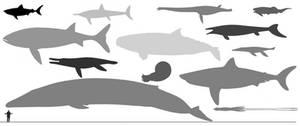 Aquarium Mk.II