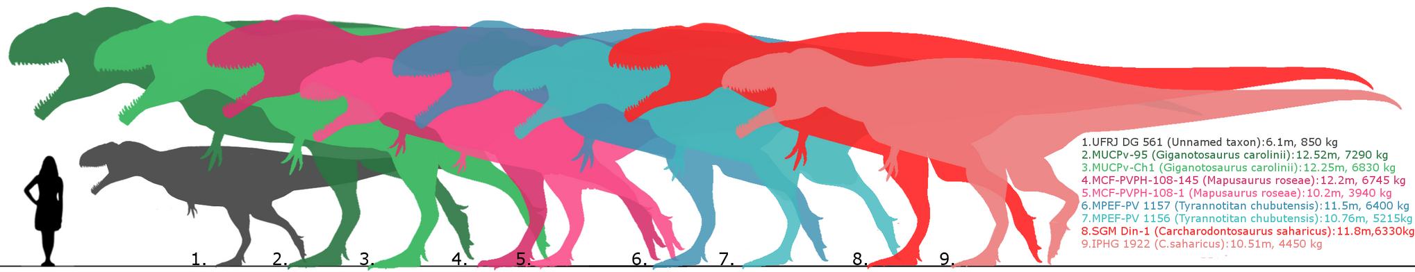 Carcharodontosaurinae specimens. by randomdinos