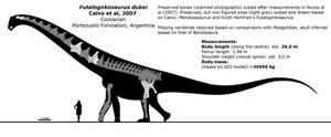 Futalognkosaurus dukei schematic. by randomdinos