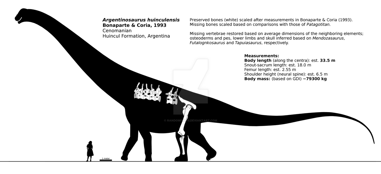 Argentinosaurus huinculensis schematic. by randomdinos
