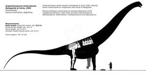 Argentinosaurus huinculensis schematic.